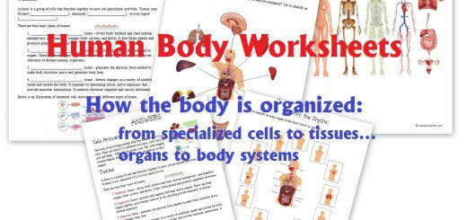 Human Body Worksheets Cells Tissues Organs and the Human Body Systems