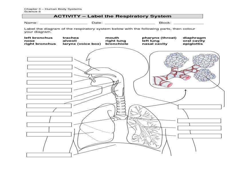 Respiratory System Fill In The Blank Worksheets Body Systems