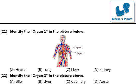 6th class olympiad Science Human Body worksheets