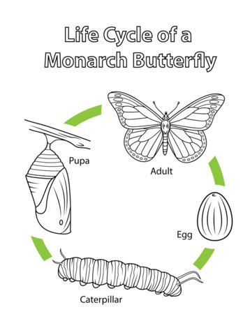 to see printable version of Life Cycle of a Monarch Butterfly Coloring page