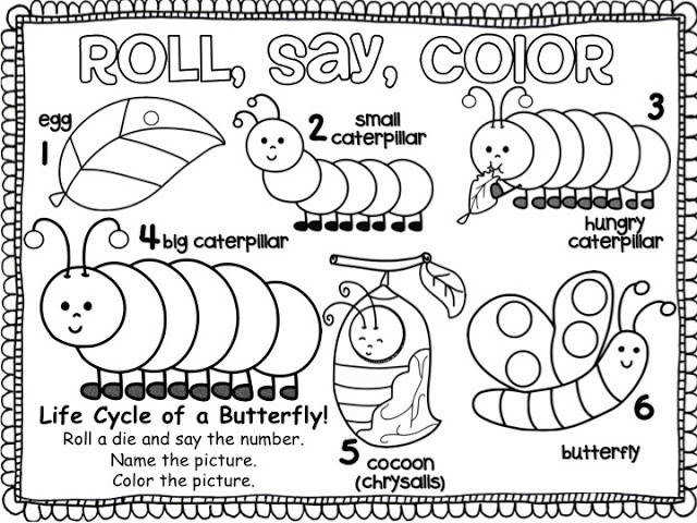 printable life cycle butterfly coloring