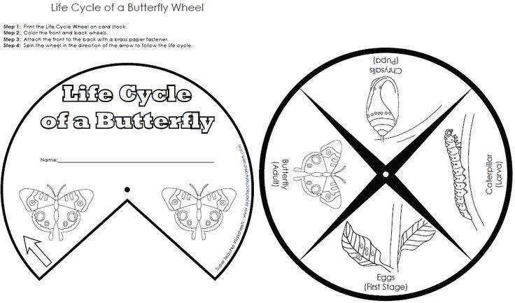 Super The Life Cycle A Butterfly Coloring Pages Cooloring the life cycle of a butterfly