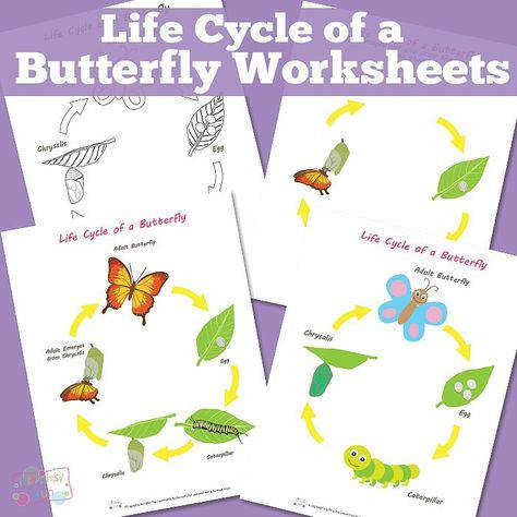 Life Cycle of a Butterfly Worksheets MFW K Unit 21 Butterfly life cycle Pinterest