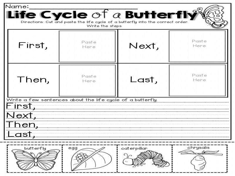Awesome Collection Life Cycle A Butterfly Printable
