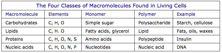 Table of four kinds of macromolecules