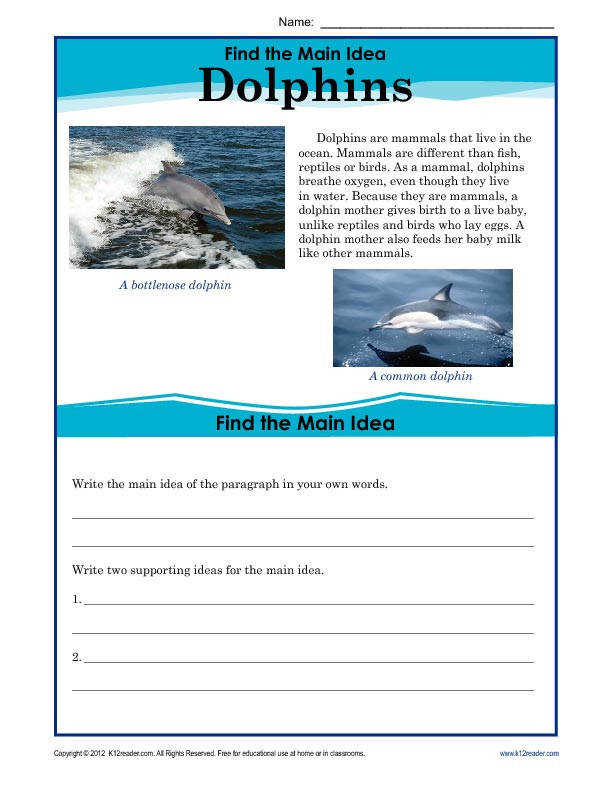 Find the Main Idea Dolphins