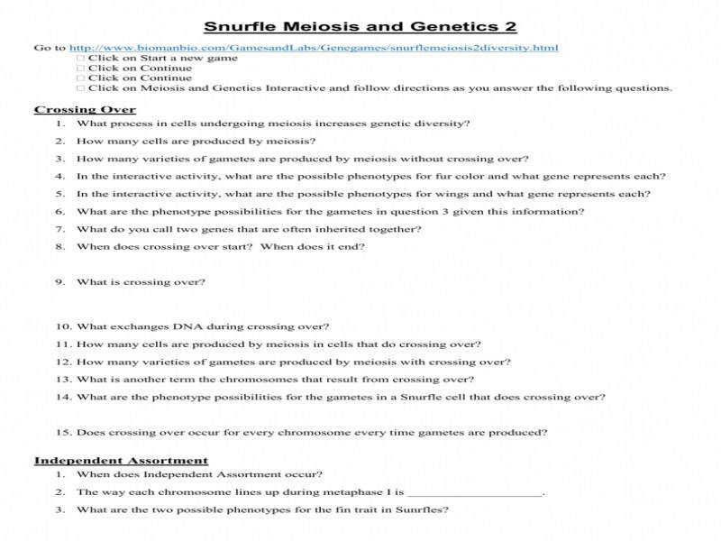 meiosis worksheet answers. Black Bedroom Furniture Sets. Home Design Ideas