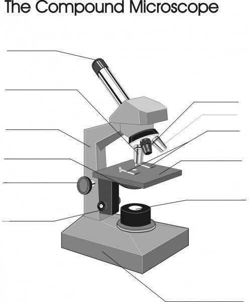 microscope diagram worksheet