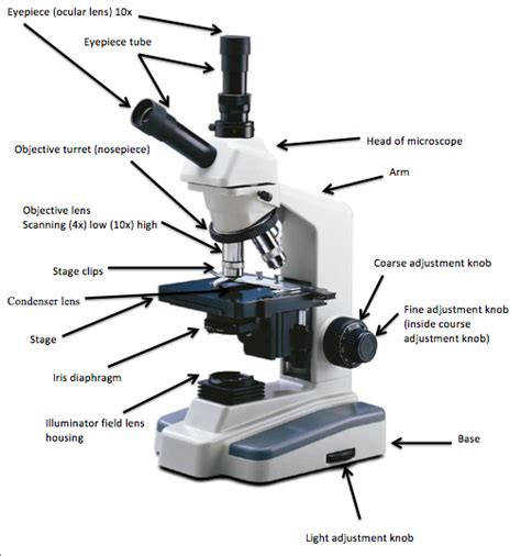 pound Light Microscope Worksheet ABITLIKETHIS