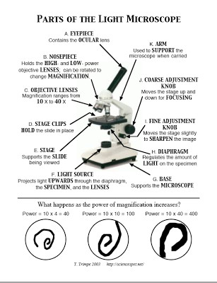 Microscope Parts Worksheet
