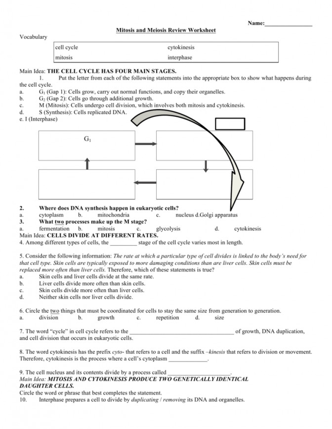 1 fa24f84a9ddd ce16bedd Section 1 Cell Division And Mitosis Work Cell Division And Mitosis Worksheet