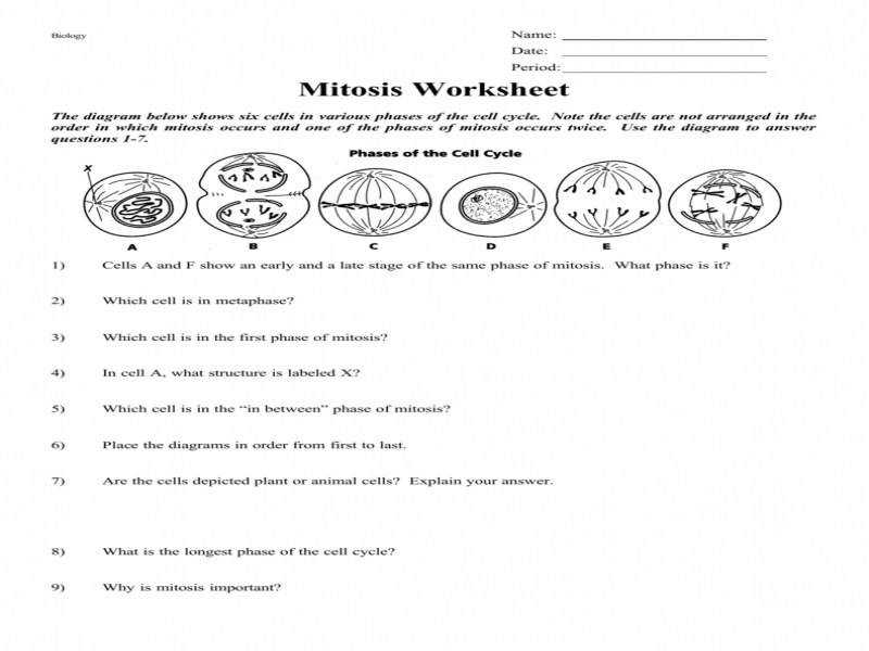 Mitosis Worksheet And Diagram Identification Answers Worksheets 1 Da37B55Bd A136A0D88A8911B8D