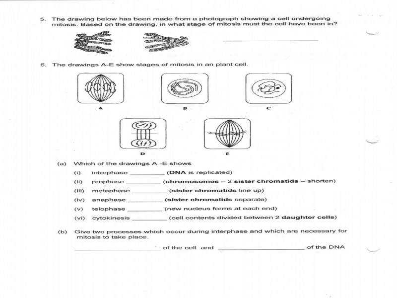 Mitosis Worksheet Answers Free Worksheets Library