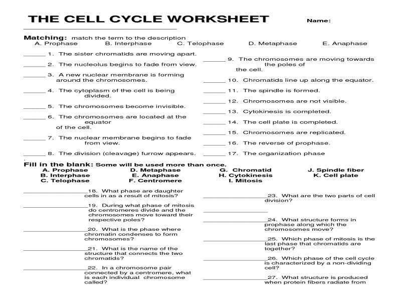 Mitosis Worksheet Matching Answers Worksheets