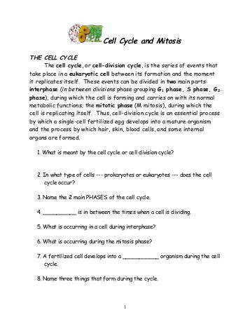 Cell cycle and mitosis worksheet fireyourmentor free printable worksheets animal coloring key pages sketch