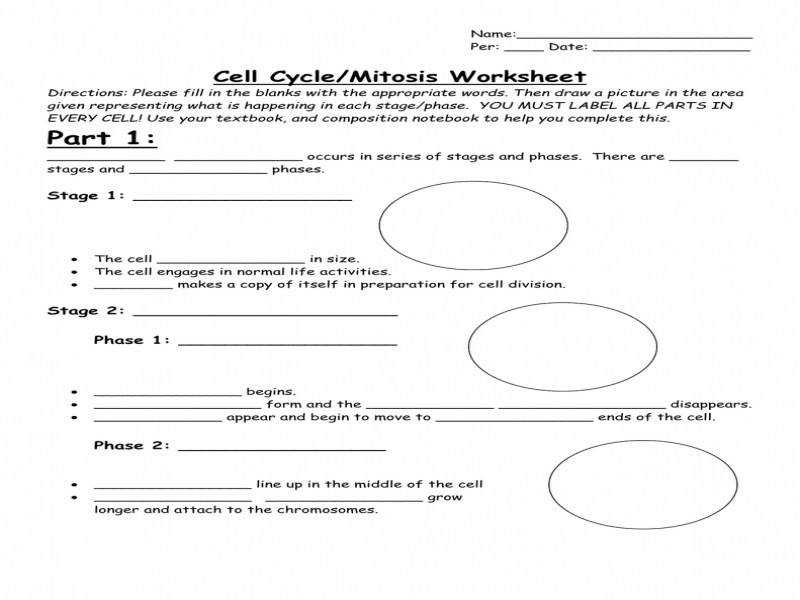 Cell Cycle mitosis Worksheet