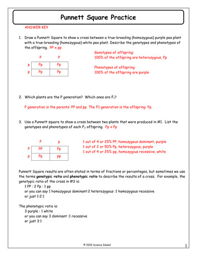 7 Punnett Square Practice Answer Keycx