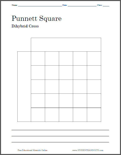 Punnett Square Dihybrid Cross Worksheet Free to print PDF file Two versions