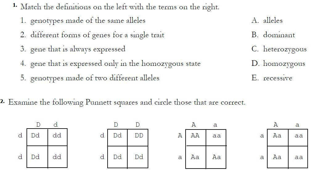 Monohybrid Cross Worksheet Answer Key