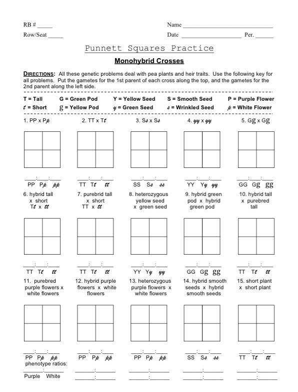 Guide Exercise Monohybrid Cross Worksheet 14 Monohybrid Cross Worksheet
