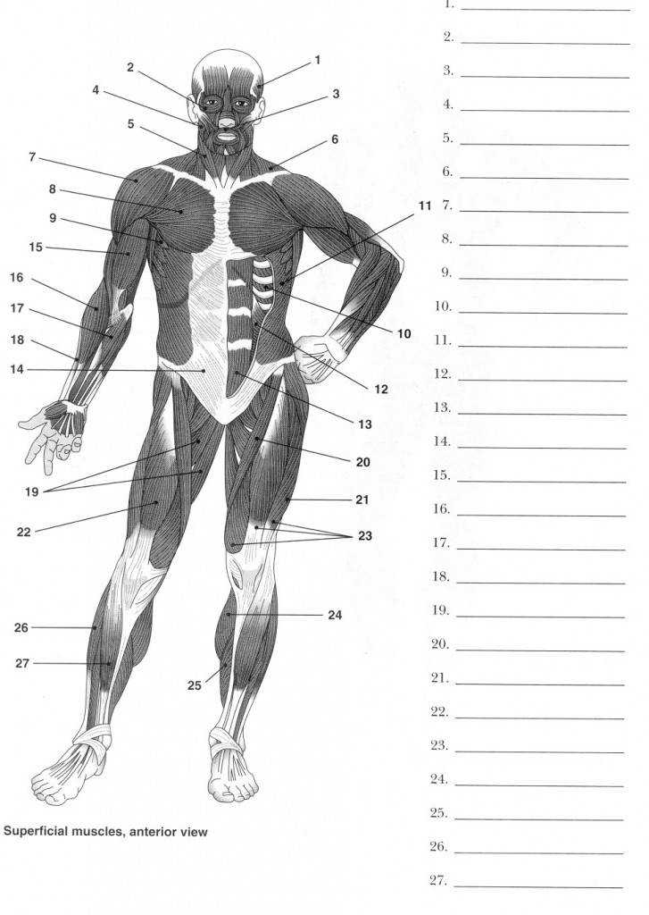 Muscle Anatomy Worksheet Labeling Muscles Worksheet Map Utah Electronic High