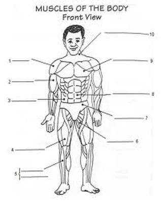 human muscle labeling worksheet – lickclick Muscles