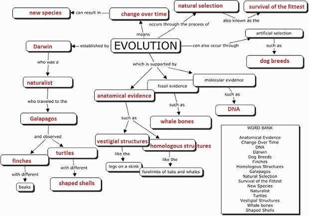 Evidence Evolution Worksheet Answers Elegant Evolution Concept Map for the Classroom Pinterest