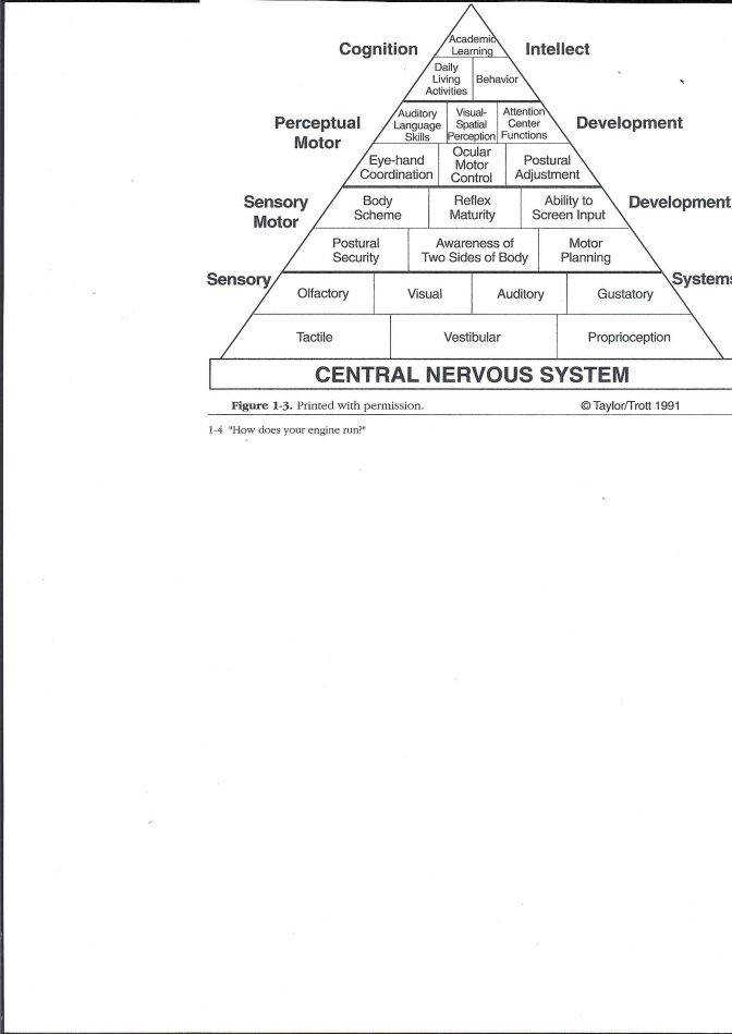 Caitlin Potter Pittsfield Elementary School Nervous System Worksheet High Answers Cns Py Nervous System Lesson Plan