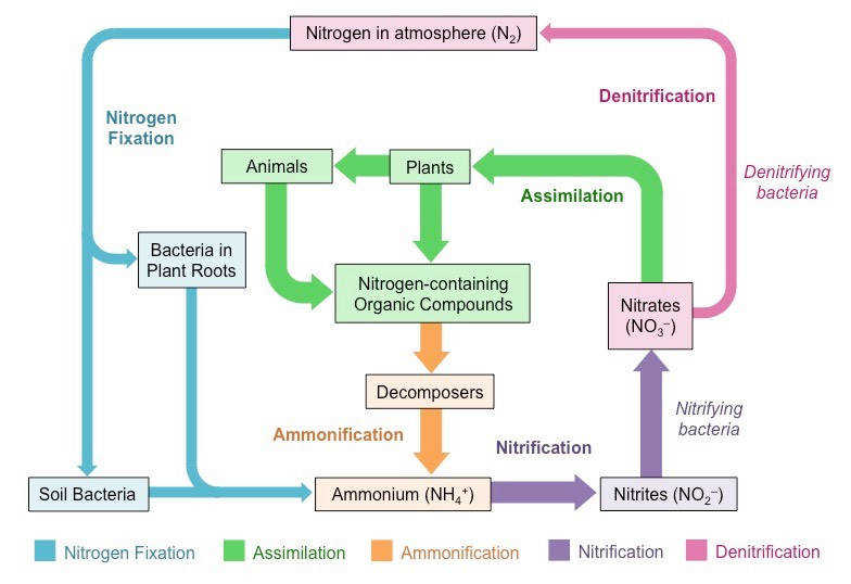 The Nitrogen Cycle My Image 1 My Image 2