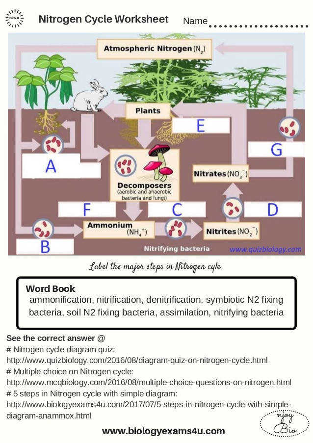 Nitrogen Cycle Worksheet Name Label the major steps in Nitrogen cyle ammonification nitrification denitrification