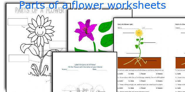 Parts of a flower worksheets