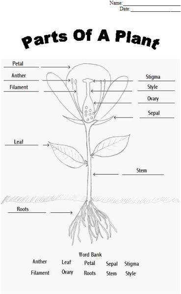 Parts of a plant worksheet Find a flower to dissect and glue appropriate parts to