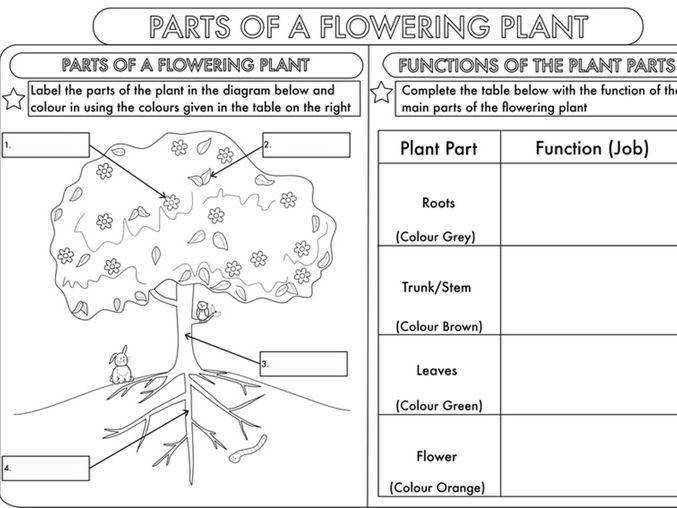 Year 3 Science Parts of a Plant Worksheet by beckystoke Teaching Resources Tes
