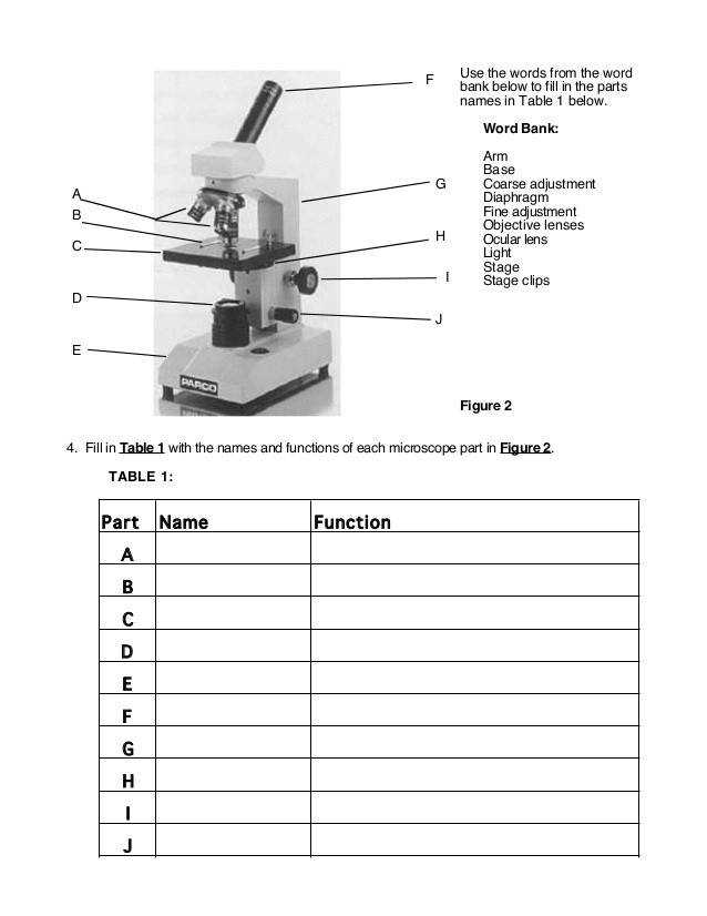 pound Microscope Parts And Functions Worksheet