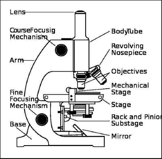 Microscope Drawing Worksheet Parts Of A Micr...