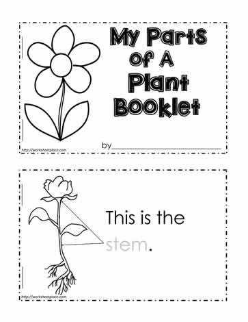 Parts of Plants And Their Functions