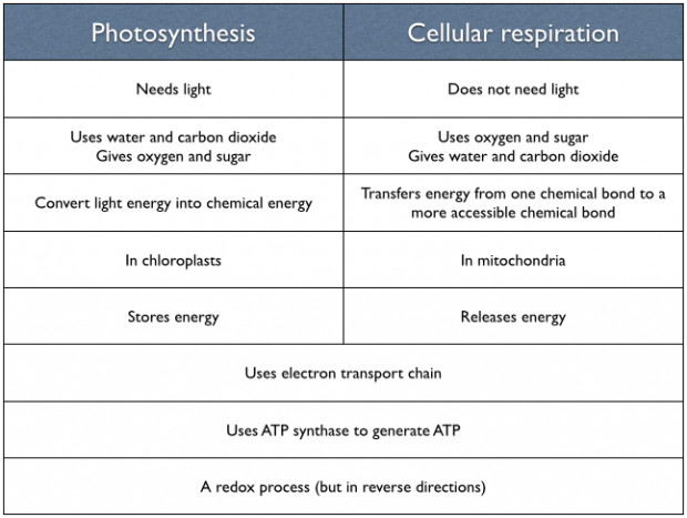 20 Gallery of Similarities Between synthesis And Cellular Respiration Concept
