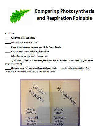 How to Clarify synthesis & Cellular Respiration A Free Foldable