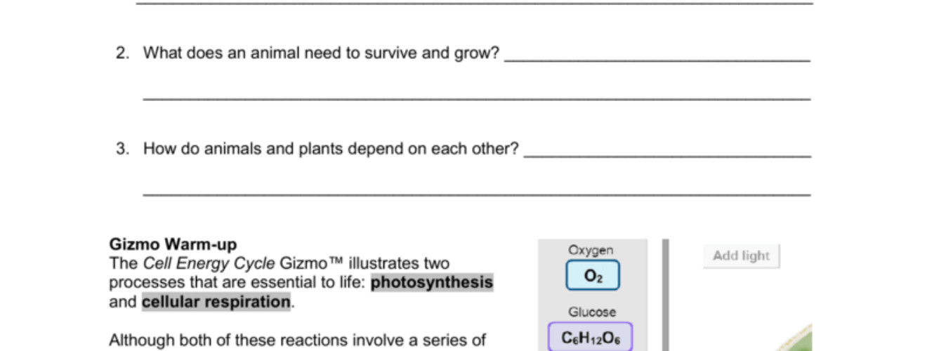 synthesis And Cellular Respiration Worksheet Answers Downloads full 791x1024 thumbnail 150x150 medium 232x300