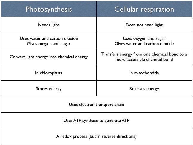 photosynthesis and cellular respiration worksheet. Black Bedroom Furniture Sets. Home Design Ideas