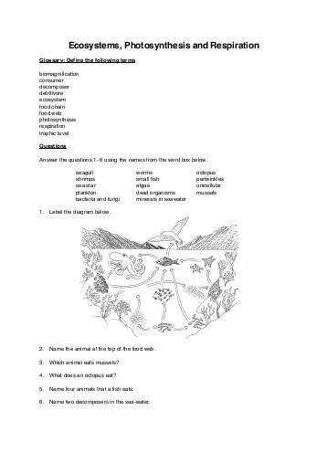 Ecosystems synthesis and Respiration worksheet booklet