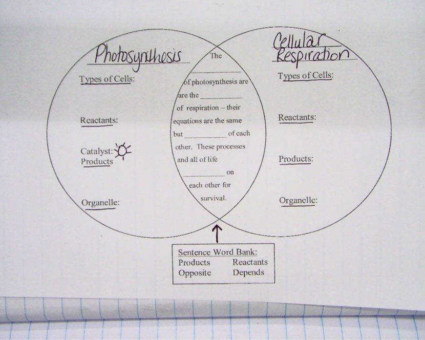 Cellular Respiration Diagram Worksheet 3a2bd2c4dfe37cf6bb b078