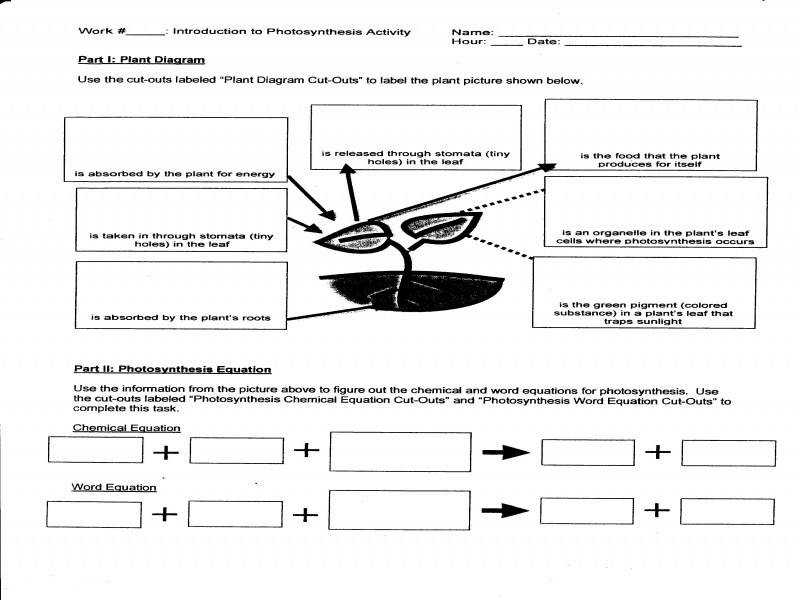 Photosynthesis Diagram Worksheet Biology Junction Answers