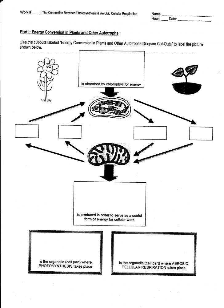 Photosynthesis Diagrams Worksheet Homeschooldressage Com