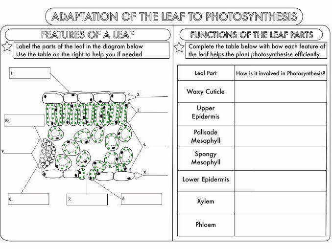GCSE synthesis Topic Worksheets by beckystoke Teaching Resources Tes