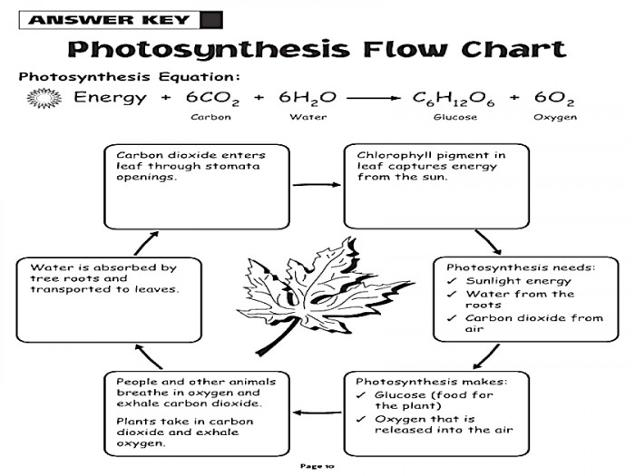 Photosynthesis Worksheet Answers Homeschooldressage