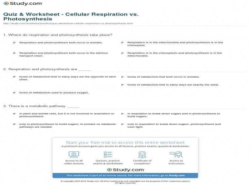 Quiz & Worksheet Cellular Respiration Vs synthesis