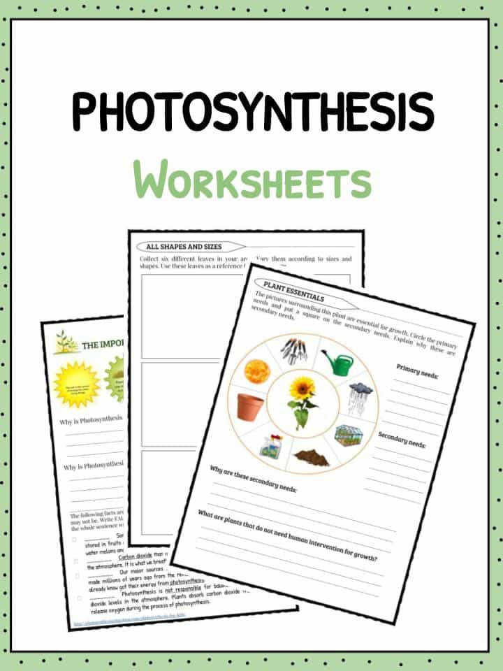 Download the synthesis Facts & Worksheets