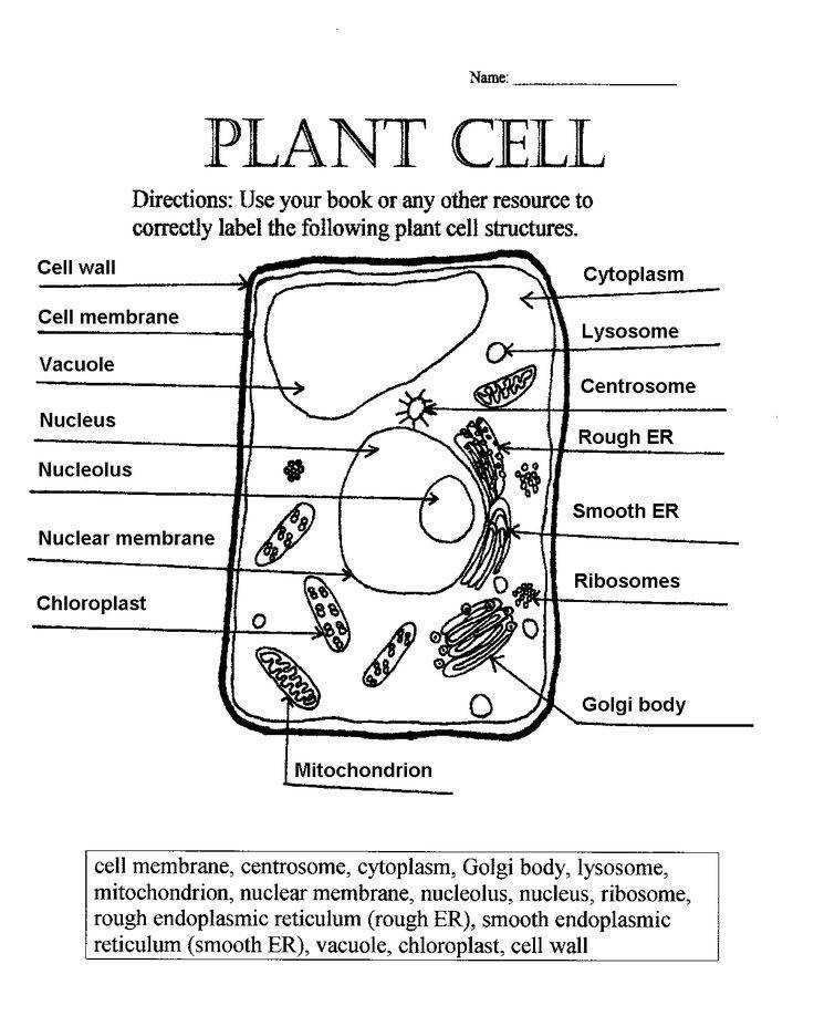 plant cell parts worksheet with word bank