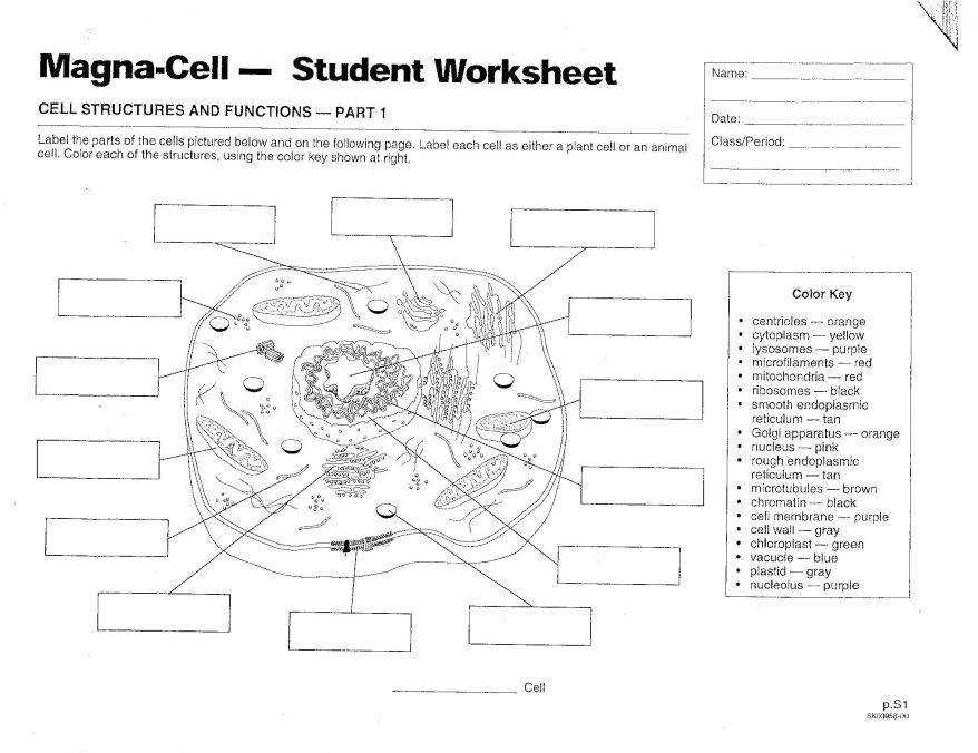 Coloring Download File 71 Marvellous Animal Cell Coloring Worksheet And Plant Pdf marvellous animal